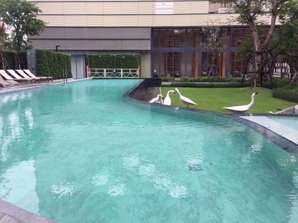 Picture of 1 bed Condo in The Base Garden Rama 9 Huamak Sub District C11819